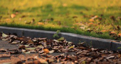 Fallen Leaves Pavement Lawn Leaves  - 传说中的顾彬清 / Pixabay