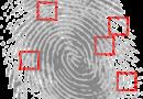 Fingerprint Detective Criminal  - OpenClipart-Vectors / Pixabay