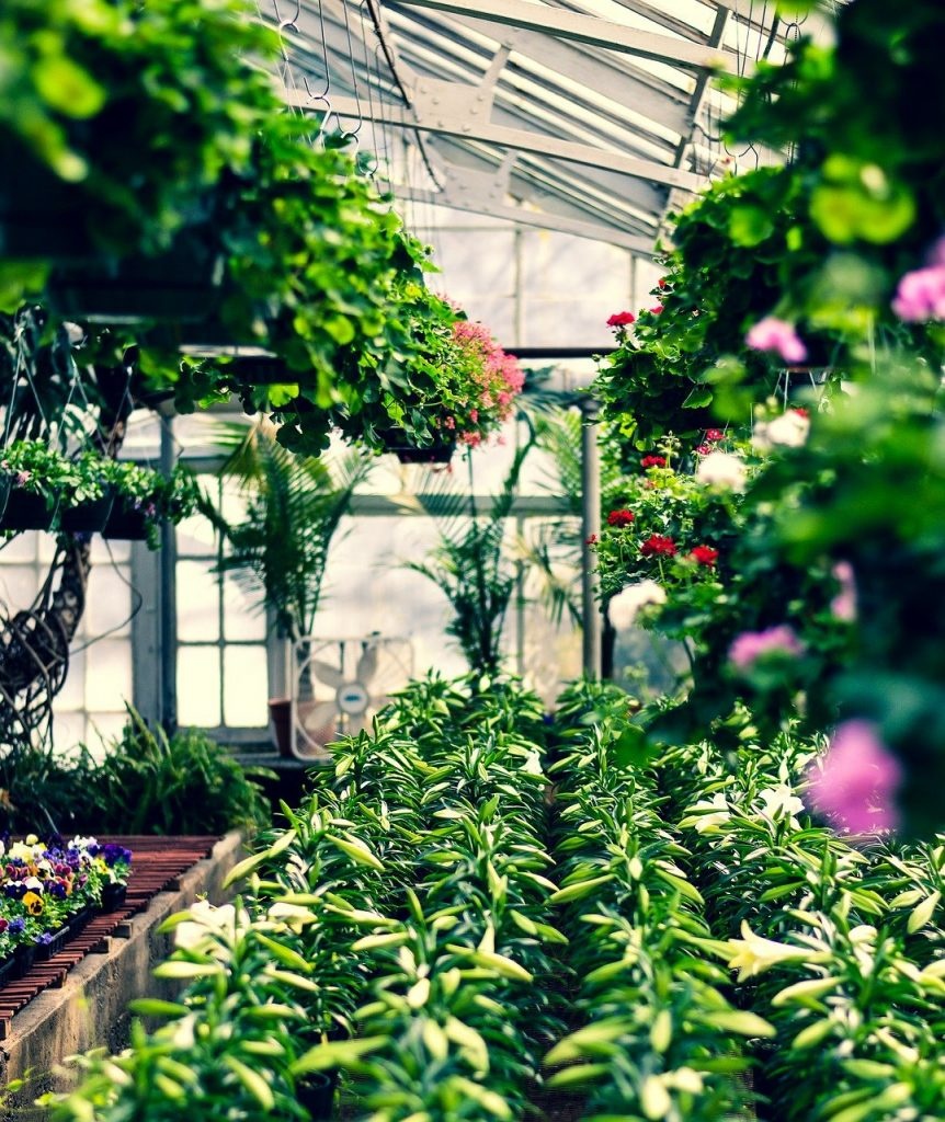 Greenhouse Flowers Plants Floral  - Veronicatxoxo / Pixabay