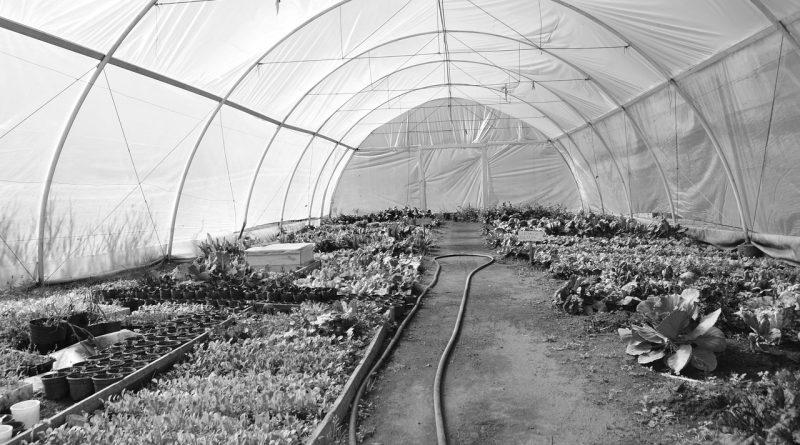 Nursery Greenhouse Planting Hose  - davidavilak / Pixabay
