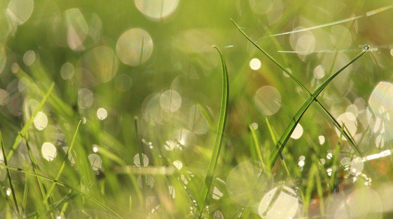 Grass Dew Bokeh Dewdrops  - KRiemer / Pixabay
