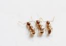 Jak vyzrát na mravence?